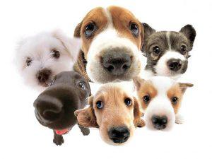 veel honden en hondenverzekeringen