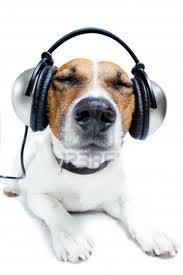 afspeellijst met muziek voor honden