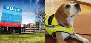 Hond met speurneus helpt ziektes op te sporen in VUmc