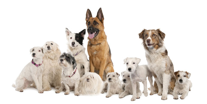 afbeelding-beste-hondenverzekering