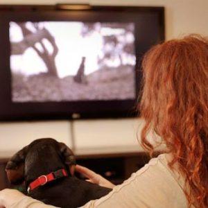 honden tv