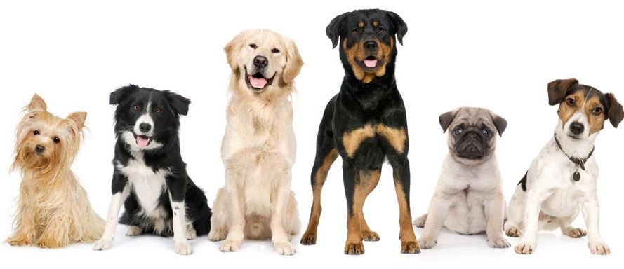 Goedkope hondenverzekering