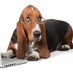 hondenverzekering vergelijken