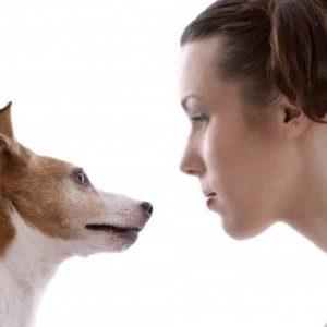 Honden verstaan mensentaal